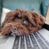 Illustration : L'adoption d'un chien pendant la pandémie : une fausse bonne idée selon les professionnels du monde animalier