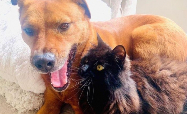 """Illustration : """"Inquiet pour le chien de la famille effrayé par les orages, ce chat a décidé de devenir son gardien attitré ! """""""