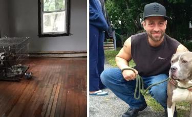 """Illustration : """"Interpellé par des aboiements provenant d'une maison vide, le voisinage découvre 2 Pitbulls livrés à eux-mêmes !"""""""