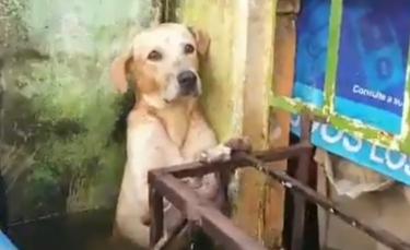 """Illustration : """"Les militaires mexicains interviennent et sauvent un chien apeuré, pris au piège par la montée des eaux, suite aux inondations dans le pays (Vidéo)"""""""