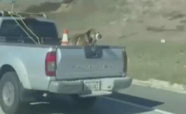 """Illustration : """"Interpellée par l'état d'un chien attaché à l'arrière d'une voiture en marche sur l'autoroute, elle filme la situation et le sauve !"""""""