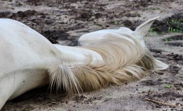 """Illustration : """"Faire face à la mort de son cheval"""""""