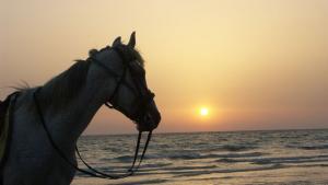Illustration : La durée de vie du cheval