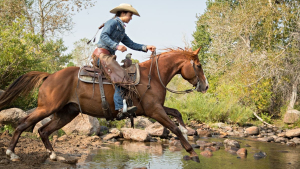 Illustration : L'équitation western