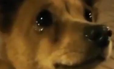"""Illustration : """"L'émouvante réaction de ce chien qui fond en larmes face à la bienveillance d'une passante qui lui offre à manger (Vidéo)"""""""