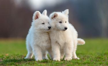 """Illustration : """"Les meilleurs noms en S pour un chien"""""""