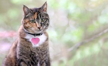 """Illustration : """"Les meilleurs noms en S pour un chat"""""""