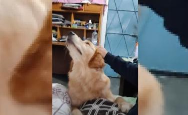 """Illustration : """"L'adorable technique de ce chien pour obtenir ce qu'il veut de son propriétaire (Vidéo)"""""""