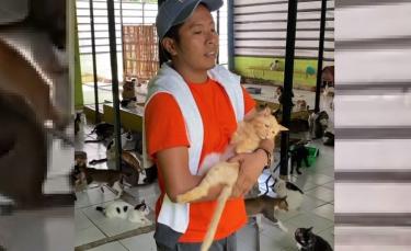 """Illustration : """"En Indonésie, cet homme vit avec plus de 480 chats errants qu'il accueille et dont il prend soin au quotidien"""""""