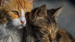 """Illustration : """"La Fondation 30 millions d'Amis prend en charge une quarantaine de chats chez une propriétaire"""