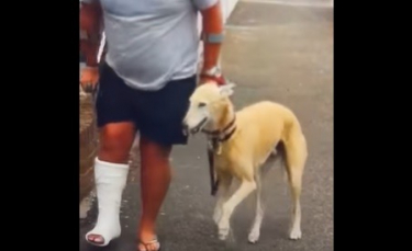 """Illustration : """"Un homme avec la jambe dans le plâtre dépense 250 € de frais vétérinaires pour son chien boiteux et découvre qu'il l'imite !"""""""