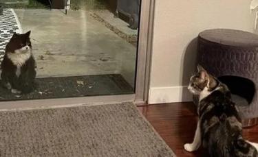"""Illustration : """"Un chaton errant en quête de nourriture fait irruption dans une maison et voit sa vie changer à jamais !"""""""