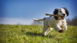 Illustration : 10 astuces pour garder votre chien heureux et épanoui