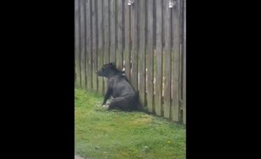 """Illustration : """"Un chien rend quotidiennement visite au chiot des voisins pour obtenir son massage (vidéo)"""""""