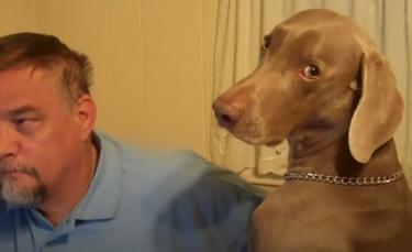 """Illustration : """"Un homme joue l'ignorance avec son chien, mais le Braque de Weimar fait tout pour le faire perdre (vidéo)"""""""