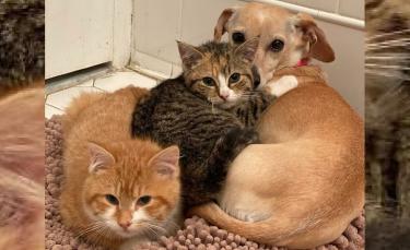 """Illustration : """"Une chienne devient la maman de 2 chatons timides et retrouvés dans une cour"""""""