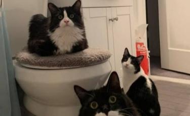 """Illustration : """"20 chats pour qui la notion"""