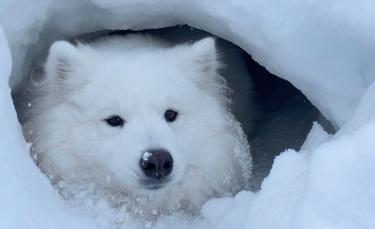 """Illustration : """"Un chien découvre une grotte enneigée et décide d'en faire sa nouvelle maison ! """""""