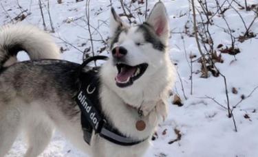 """Illustration : """"Un chien aveugle ne peut contenir sa joie lorsqu'il découvre la sensation de la neige (vidéo)"""""""