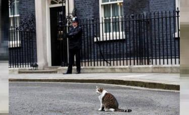"""Illustration : """"Larry fête ses 10 ans en tant que chat chasseur de rongeurs à la résidence du Premier ministre britannique"""""""