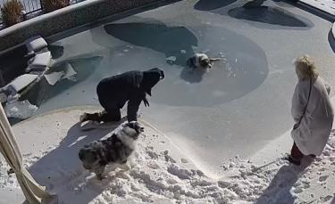 """Illustration : """"Le sauvetage réflexe d'un homme pour sauver son chien piégé sous la glace de sa piscine (vidéo)"""""""