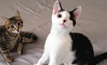 """Illustration : """"Un chaton affaibli, faisant la taille de la paume d'une main, se rétablit et devient ami avec un chat borgne"""""""