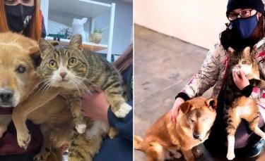 """Illustration : """"Inséparables, le chien aveugle et son ami chat ont finalement été adoptés ensemble"""""""