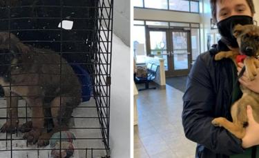 """Illustration : """"Un chiot blessé à la tête avec un pistolet à billes et abandonné dans une cage a été adopté"""""""