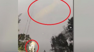 Illustration : Un lamantin sauve un chien de la noyade qui se débattait depuis des heures ! (Vidéo)