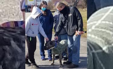 """Illustration : """"Ethan, le chien retrouvé affamé sur un parking a rencontré la famille qui l'a sauvé !"""""""