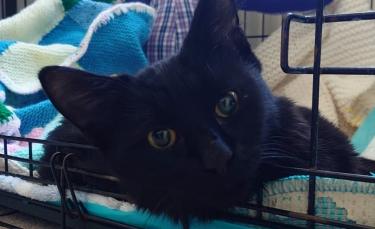 """Illustration : """"Des éboueurs découvrent un chat édenté et aux pattes cassées. Les vétérinaires pensent à l'euthanasie avant que les réseaux sociaux s'en mêlent !"""""""