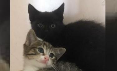 """Illustration : """"Des chatons de 4 mois nés dans une grange à foin attendent toujours une famille !"""""""