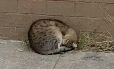 """Illustration : """"Un chat errant ne peut cacher son bonheur lorsqu'il revoit cette passante s'approcher de lui"""""""