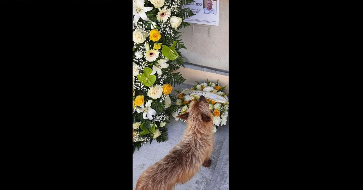 Chaque jour, ce chien parcourt des kilomètres pour visiter la tombe de ce cimetière
