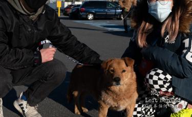 """Illustration : """"Après des mois d'attente, les 27 chiens sauvés d'un camion de viande rencontrent enfin leur famille"""""""