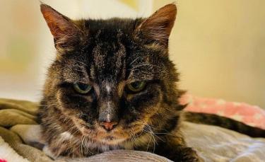 """Illustration : """"Un chat disparu depuis 20 ans vit ses derniers moments avec son propriétaire"""""""