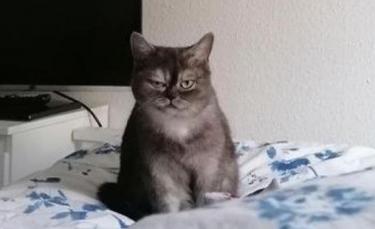 """Illustration : """"Un chat au visage grincheux, abandonné dans un parc à roulottes espère une dernière chance avec l'adoption d'une famille"""""""