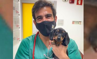 """Illustration : """"La technique imparable et adorable d'un vétérinaire pour vacciner les chiens sans qu'ils le devinent"""""""