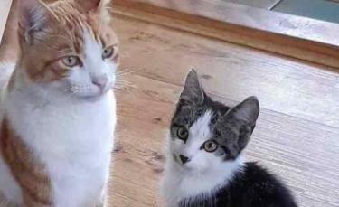 """Illustration : """"Un chat ramène un chaton errant au domicile de ses parents et espère leur gentillesse en retour"""""""