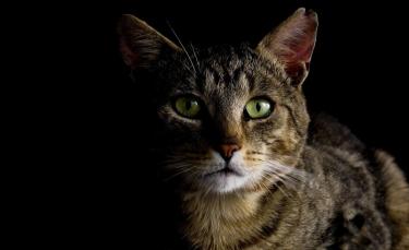"""Illustration : """"Après un accident sur l'autoroute, leur chat s'échappe de sa caisse de transport. Les propriétaires se lancent dans 19 jours de recherches intenses !"""""""