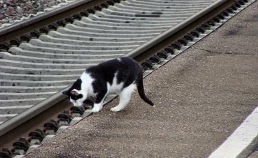 """Illustration : """"Un chat saute dans un train et parcourt plusieurs kilomètres au grand dam de sa propriétaire"""""""