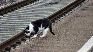 Illustration : Un chat saute dans un train et parcourt plusieurs kilomètres au grand dam de sa propriétaire