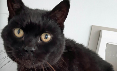"""Illustration : """"Un chat retrouvé 14 ans après sa disparition dans un établissement pour personnes avec des troubles de l'apprentissage qu'il occupait depuis 13 ans !"""""""
