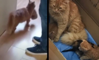 """Illustration : """"Une maman chat amène ses chatons malades dans une clinique pour humains en espérant leur aide"""""""