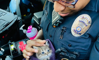"""Illustration : """"Deux policiers en patrouille découvrent un chaton abandonné qui ne veut plus les quitter ! """""""