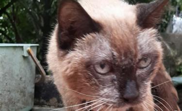 """Illustration : """"Une Thaïlandaise détiendrait le chat le plus vieux du monde âgé de 34 ans ! (Vidéo)"""""""