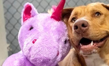 """Illustration : """"Le chien errant tombé amoureux d'une licorne en peluche a été adopté"""""""