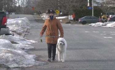 """Illustration : """"Un chien stoppe la circulation lorsque sa propriétaire, touchée par une crise, s'effondre sur la route (vidéo)"""""""