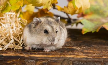 """Illustration : """"Un homme abandonne deux hamsters sur le bord de la route et leur laisse seulement quelques graines pour se nourrir"""""""