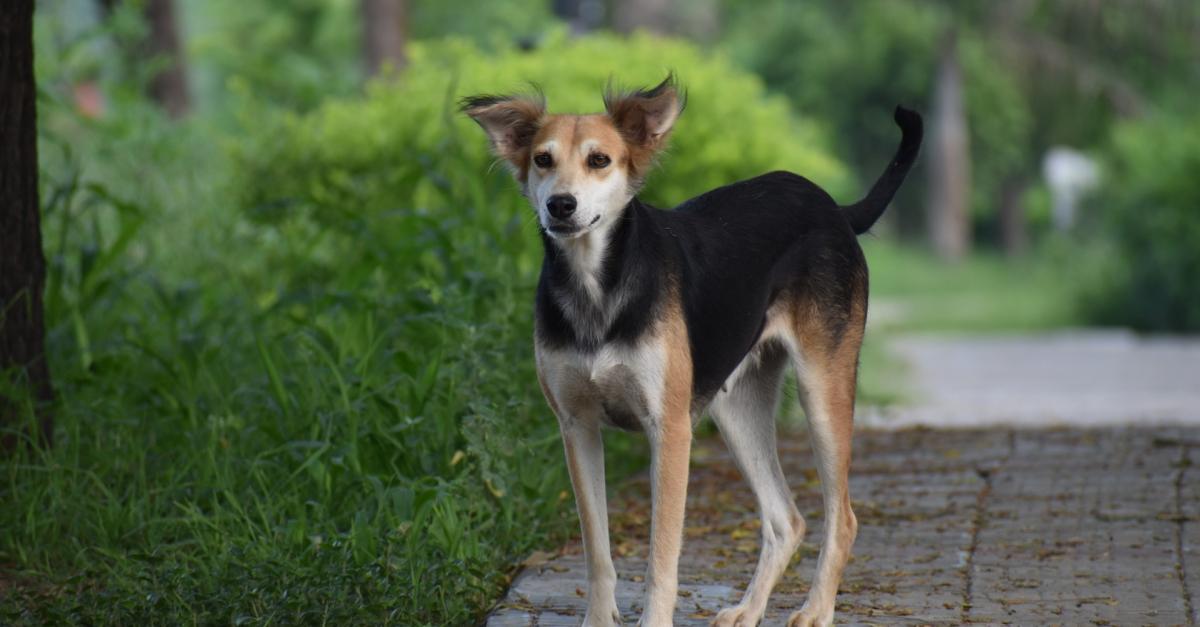 La Hollande devient le premier pays sans chien abandonné grâce à des mesures politiques strictes